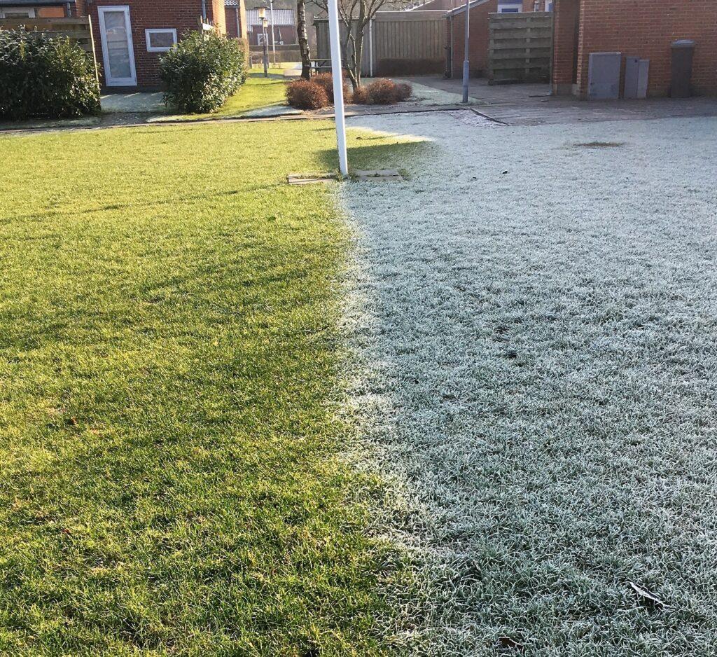 rimfrost på græsplæne i februar